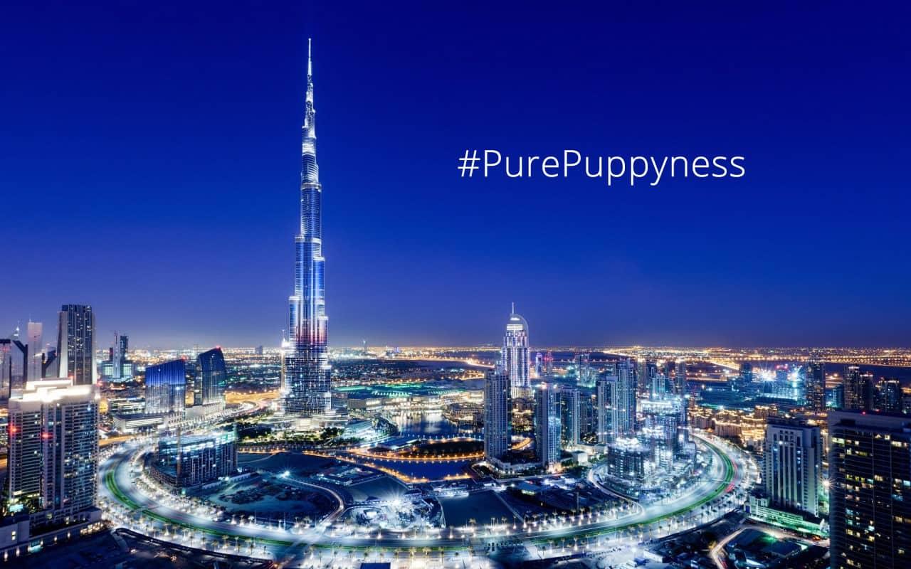 Popular Dogs of Dubai