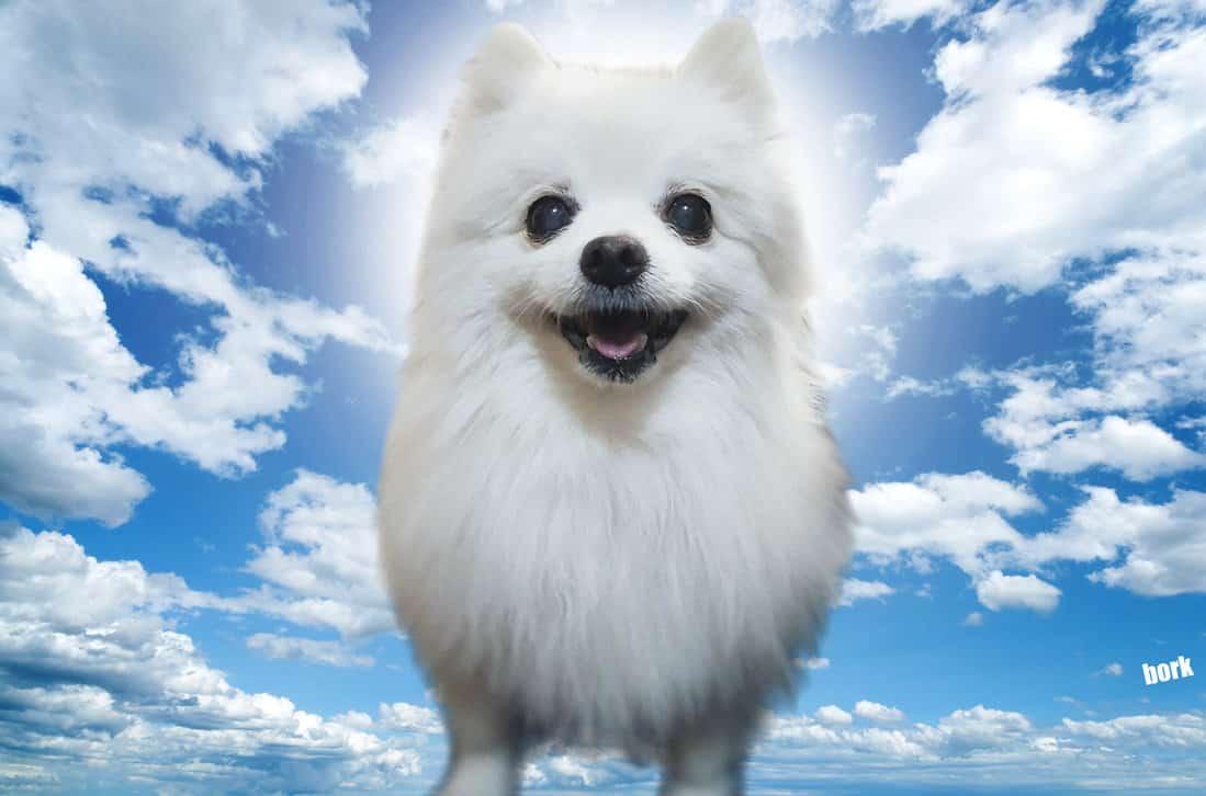 gabe the dog